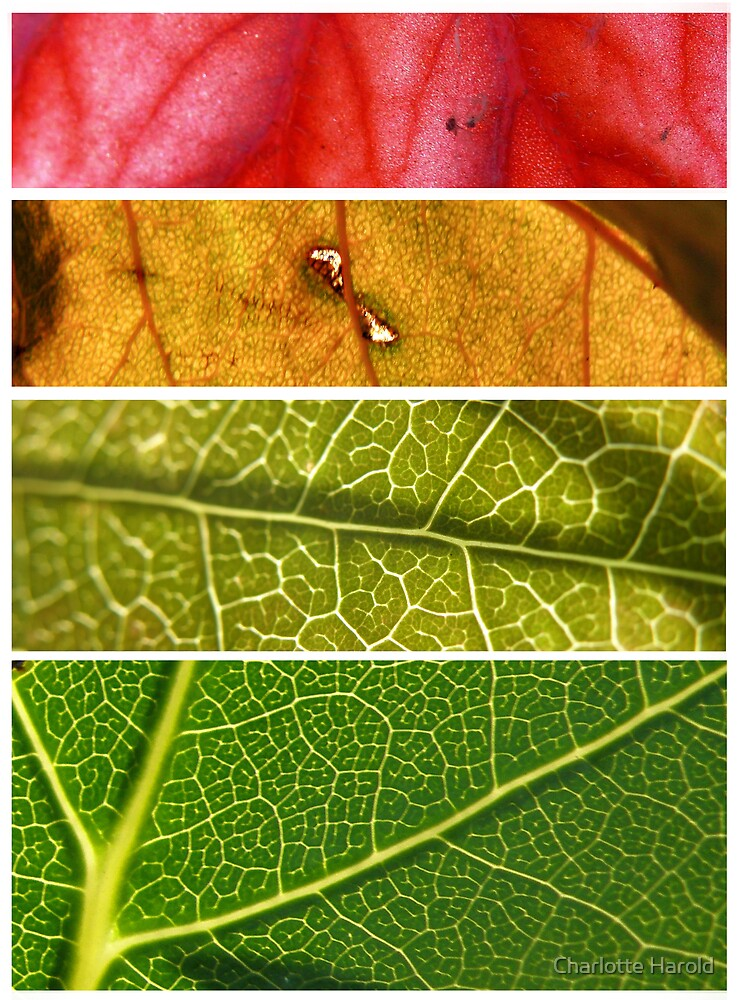 Four Leaf Colour Stories by Charlotte Harold