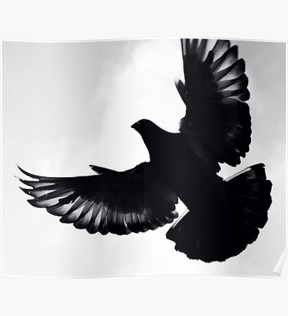 Pigeon silhouette ... Poster