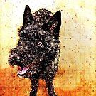 Scruffy Dog by Krista Droop