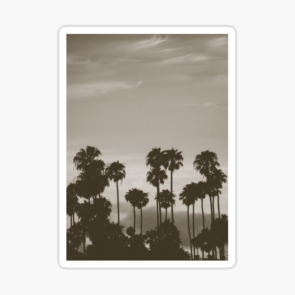 Hazy Palms Sticker