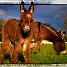Miniature Donkey baby Anastasia by Tiana  McVay