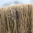 LARGE Spider by zahnartz