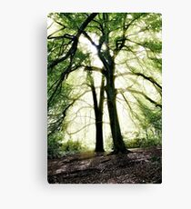 God's Rays, Sunlight streaming through trees Canvas Print