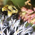 Bee on globe by zahnartz
