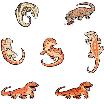 Gecko sticker batch the fourth de Colordrilos