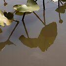 Pad Reflections by Donna Adamski