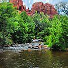 Oak Creek Canyon #2 by Barbara Manis