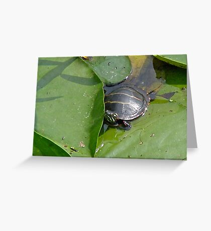 Young Painted Turtle on Lily Pads Greeting Card