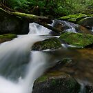 Cascading through the Mossy Boulders by Robert Mullner
