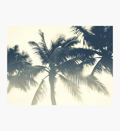 Breezy Palms / Tropical Photography Photographic Print