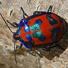 Red and Blue Beetle by Helen Phillips