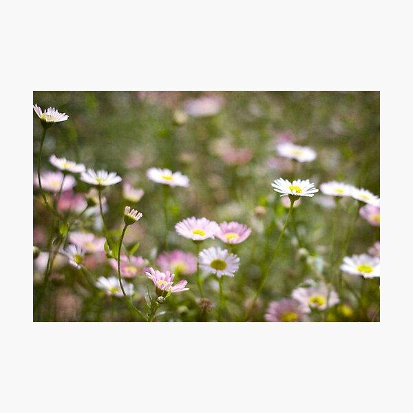 Pretty Pastels Photographic Print