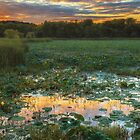Lotus Sunset Water by Owed To Nature