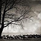 picnic under the tree by Angel Warda