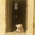 Window Dog by Alice Oates