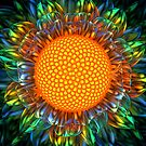 Sunburst Daisy by Ryan Bliss
