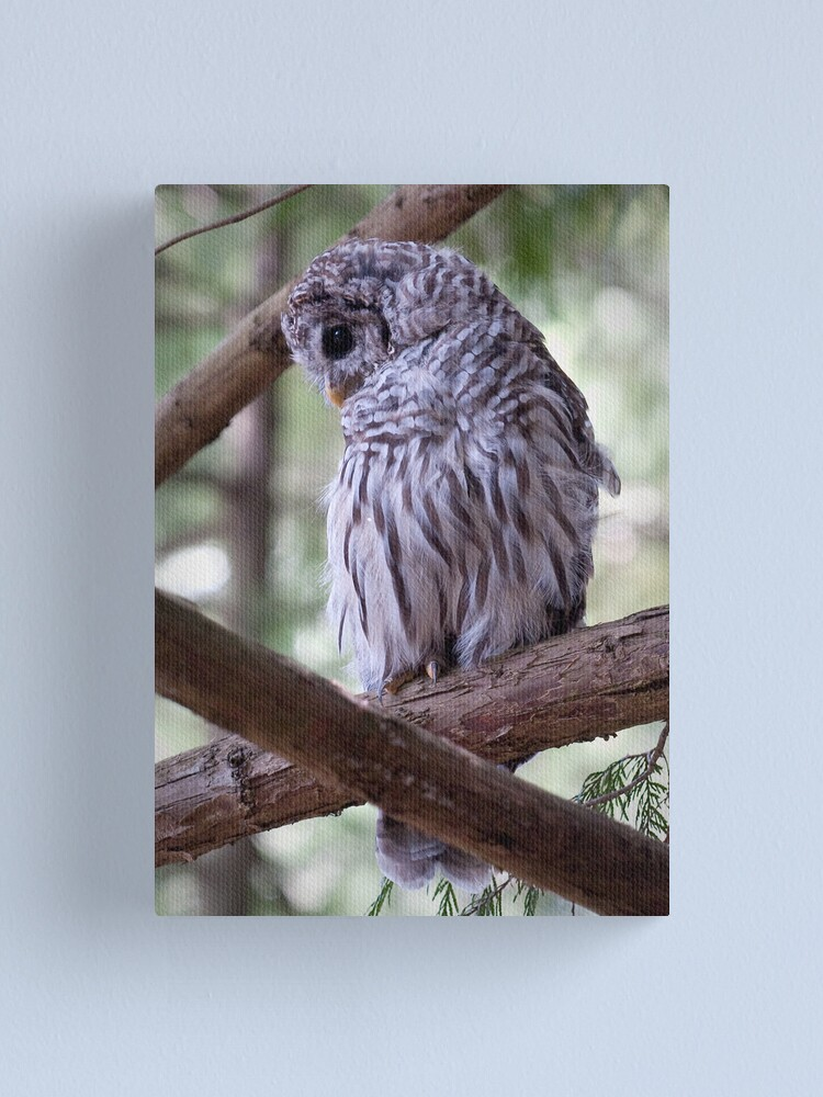 Alternate view of Baby Owl Canvas Print