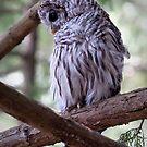 Baby Owl by toby snelgrove  IPA