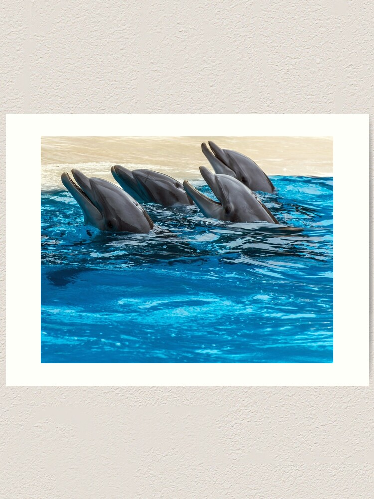 Alternate view of Four dolphins and blue water Art Print