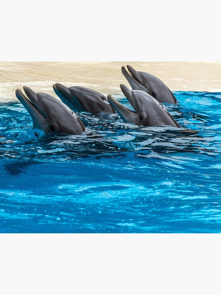 Four dolphins and blue water by tdphotogifts