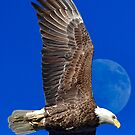 Eagle Fly Over by TJ Baccari Photography