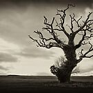 Stranded by Alan Watt