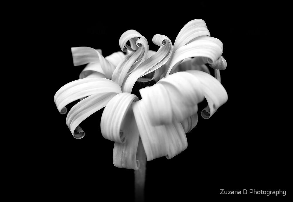 Simply Daisy by Zuzana D Photography