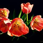 Blooming Tulips by Janette Dengo