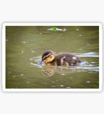Duckling Swimming Sticker