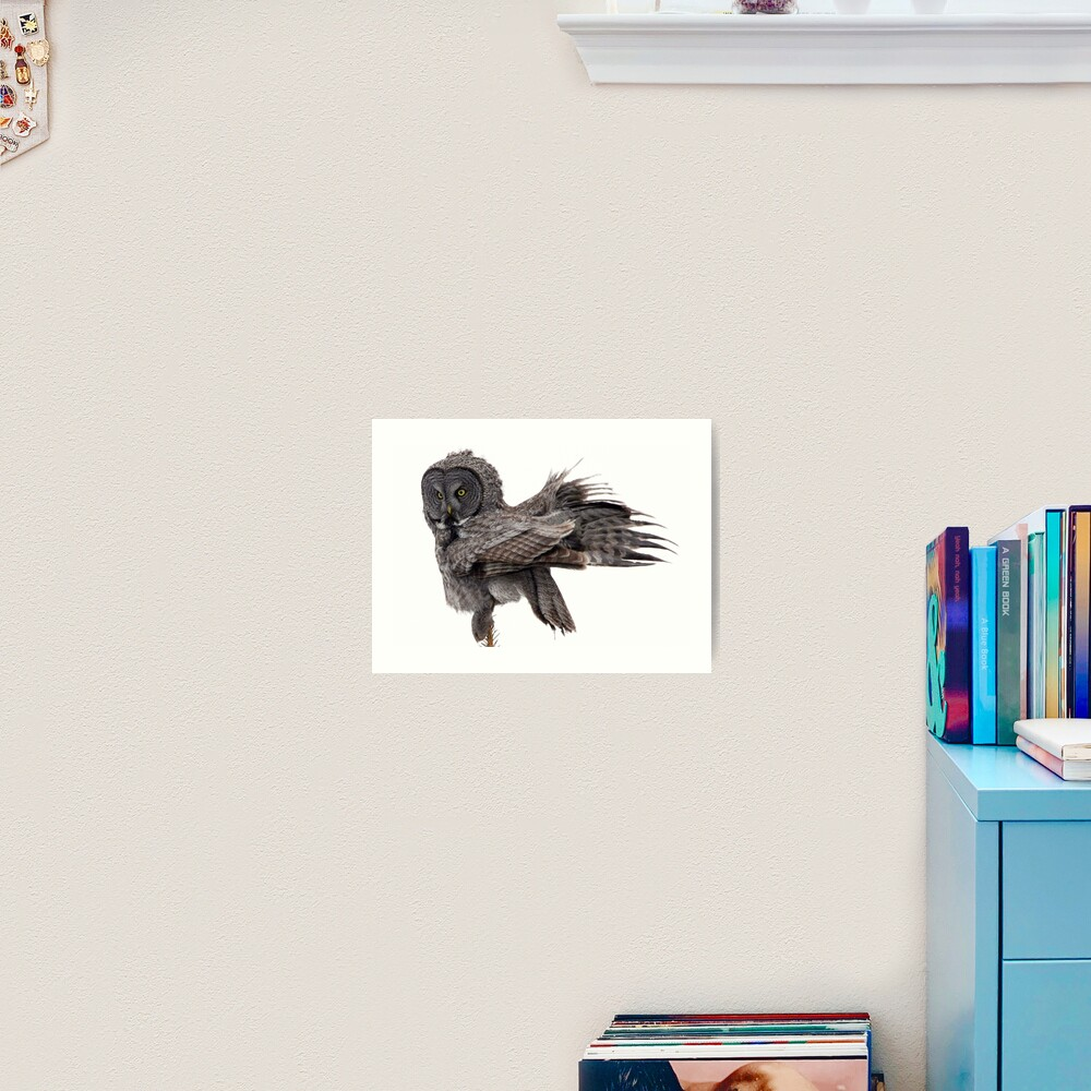 Great Grey Owl, Fluffing Art Print