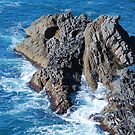 Forster Rocks - NSW Australia by Bev Woodman