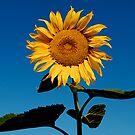 Sun Worshiper by Pamela Hubbard
