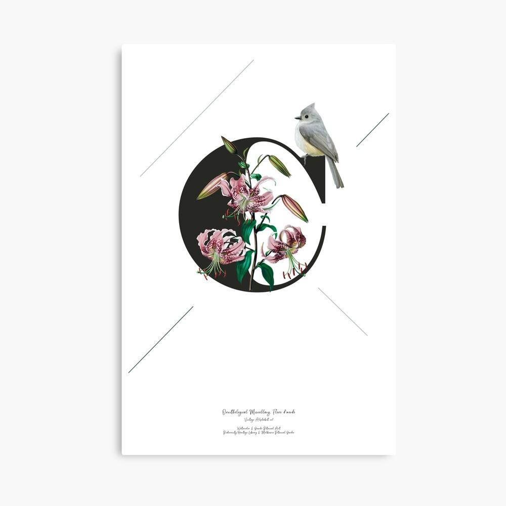 Botanical Alphabet C Leinwanddruck