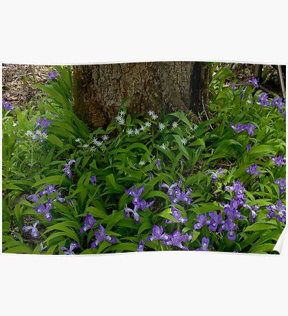 Woodland Bouquet   Poster
