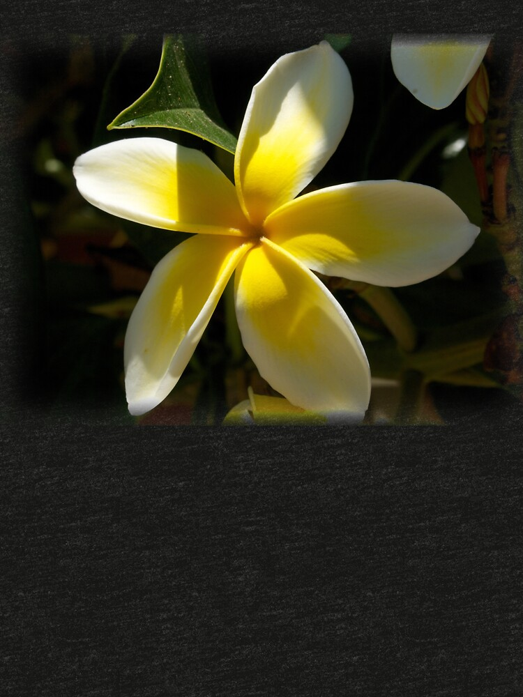 Plumeria flower from A Gardener's Notebook by douglasewelch
