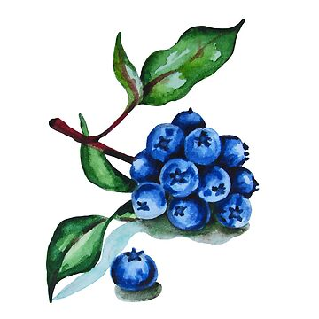 Watercolor illustration of blueberries by ativka