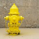 Yellow Fire Hydrant by Merrimon