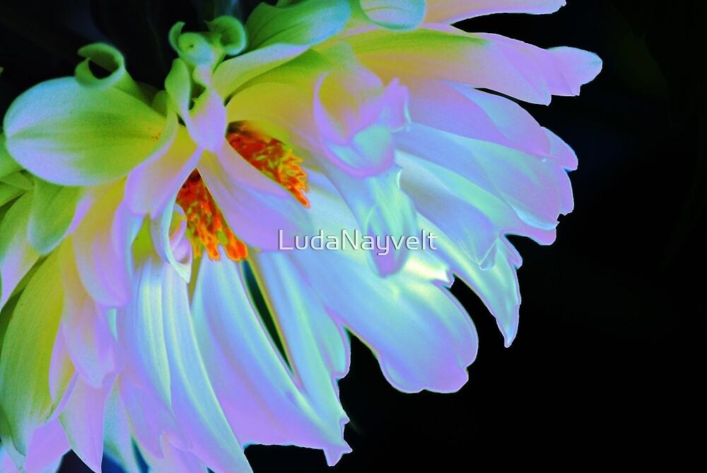 Purple Glow by LudaNayvelt