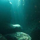 Underwater World by DiveDJ
