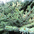 Pine by Mishimoto