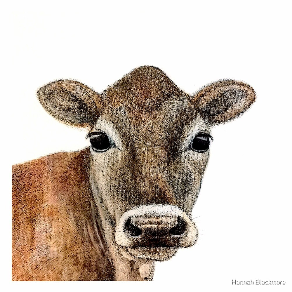 Jersey Cow Design by Hannah Blackmore