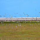 Birds in Flight, Northumberland Beach by hoppityhops