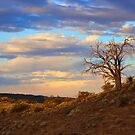 Lone tree at sunset by FranWest