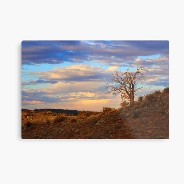 Lone tree at sunset Metal Print