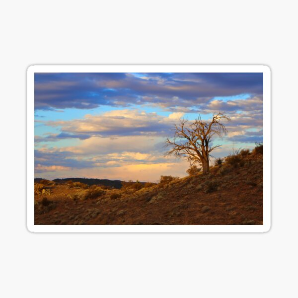 Lone tree at sunset Sticker