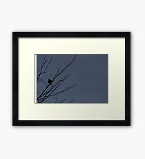 Little Black Bird Series: Blue Framed Print