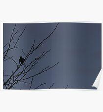 Little Black Bird Series: Blue Poster