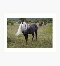 Grayson Highlands Pony Art Print