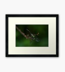Neon Green Eye Liner (Dragonfly) Framed Print