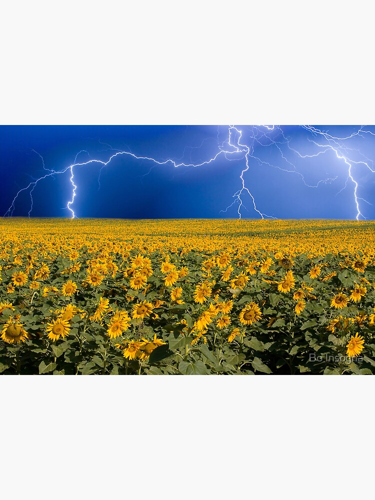 Storm on the Sunflower Field Horizon by mrbo